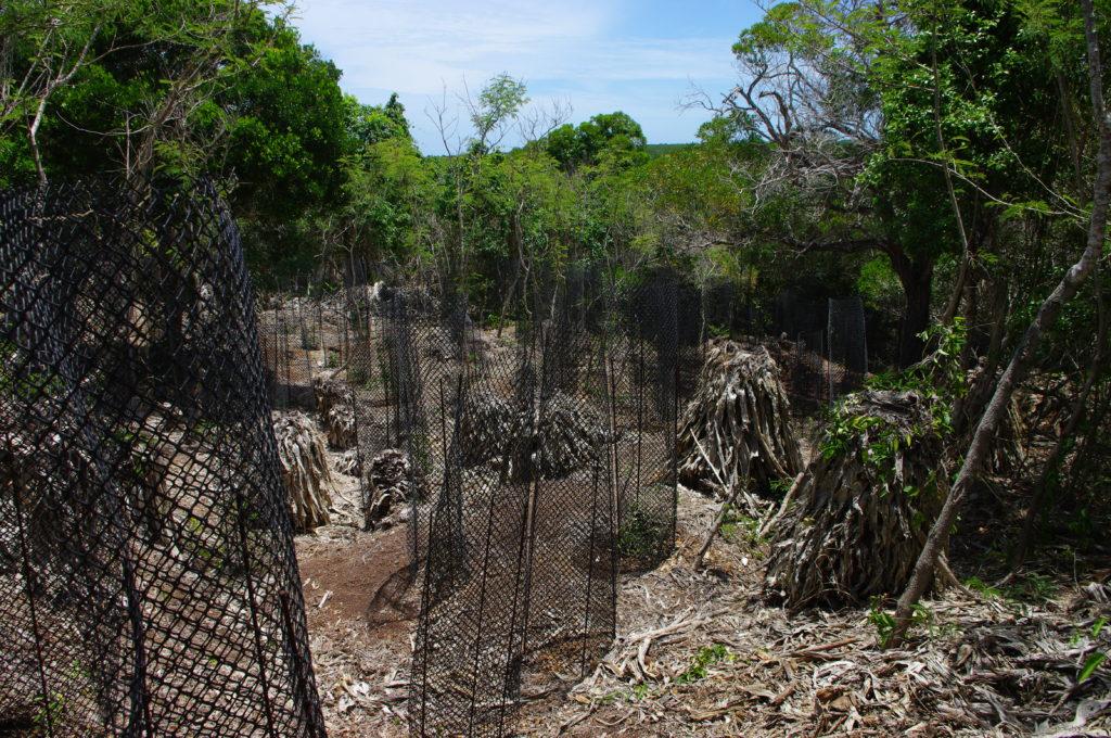 Impact sur la forêt sèche de Nouvelle-Calédonie